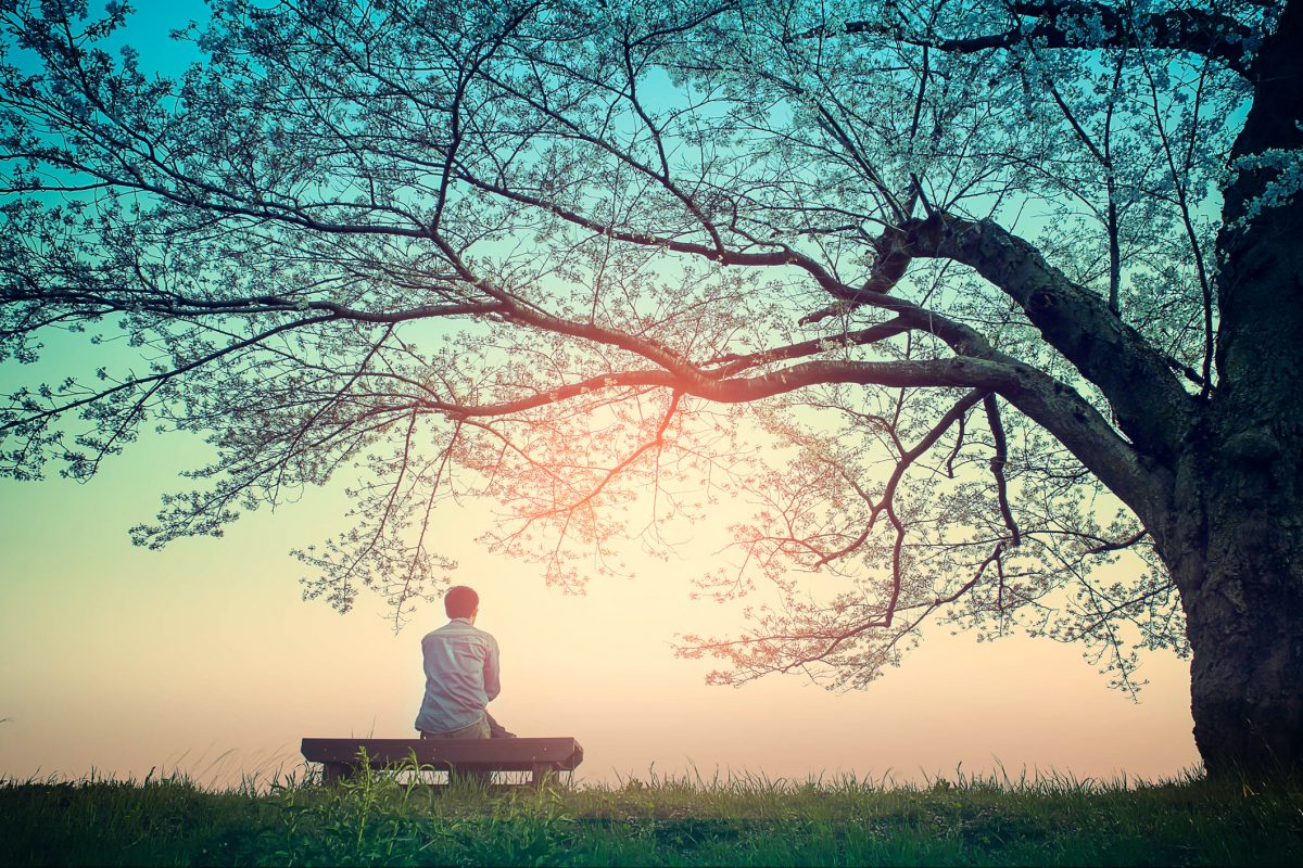 Person relaxing on bench under tree