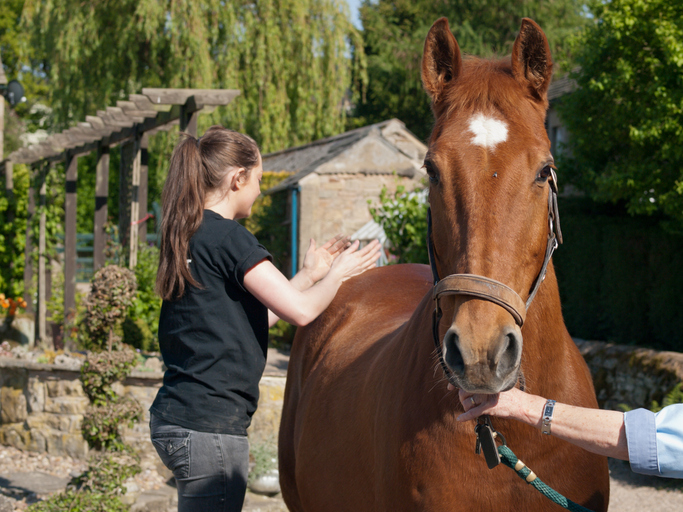 One hand in photo secures horse by lead while person with long ponytail uses massage on horse's back